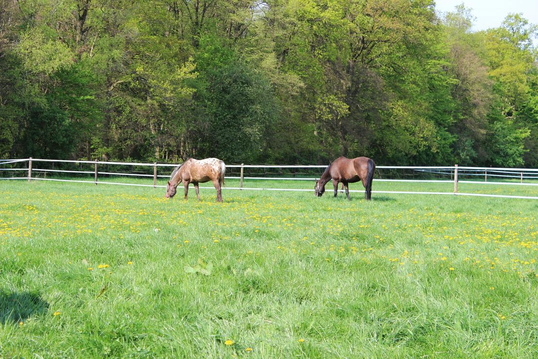 artgerechte Haltung Weiden Pferdebremsen frei !