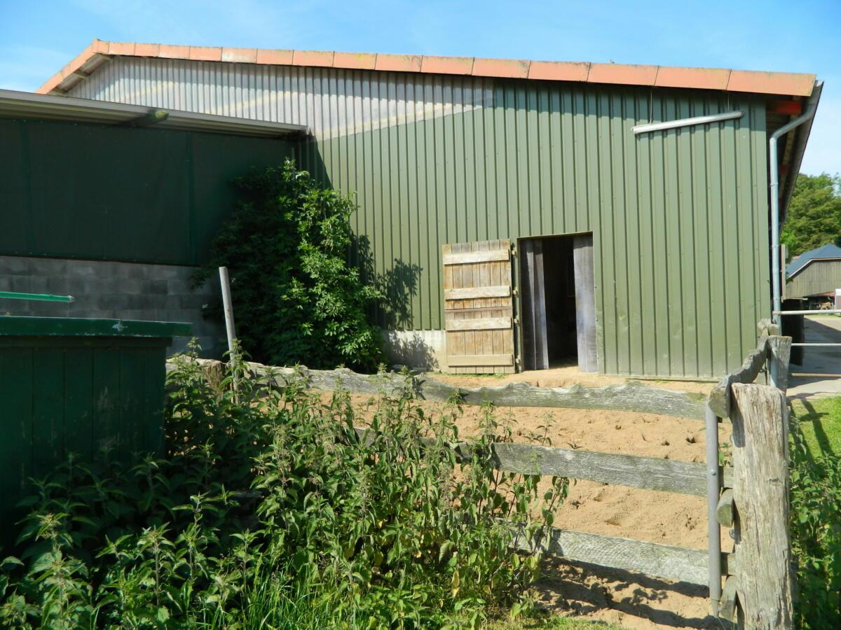Außenbox 4 x 4 m mit Paddock