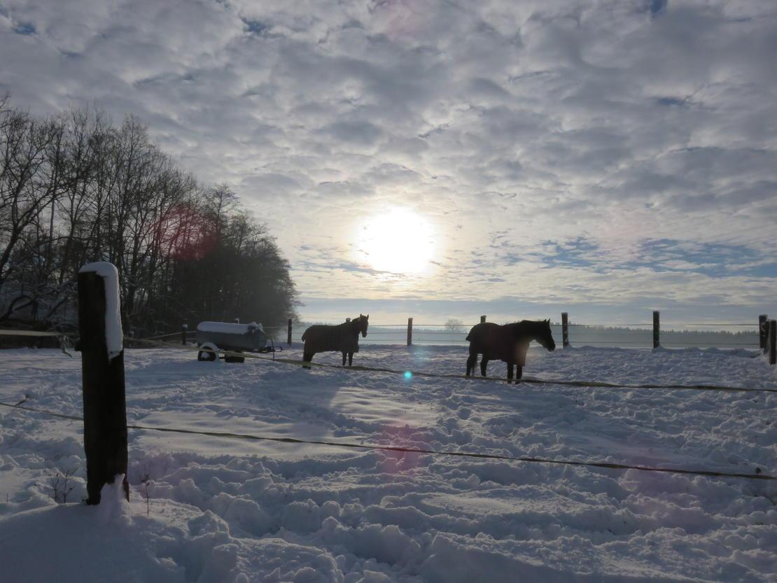 Winterimpression
