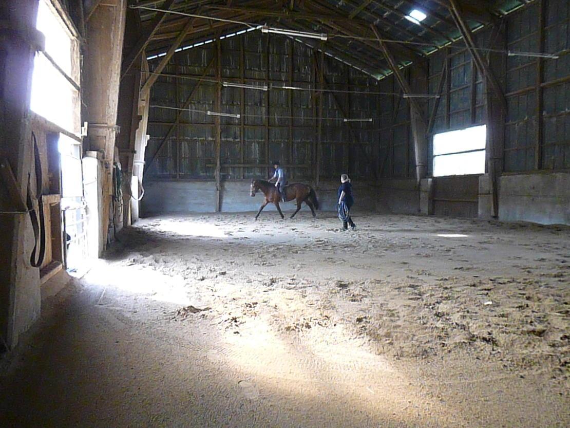 Hier arbeiten auch Pferde über 1,70 Stockmass