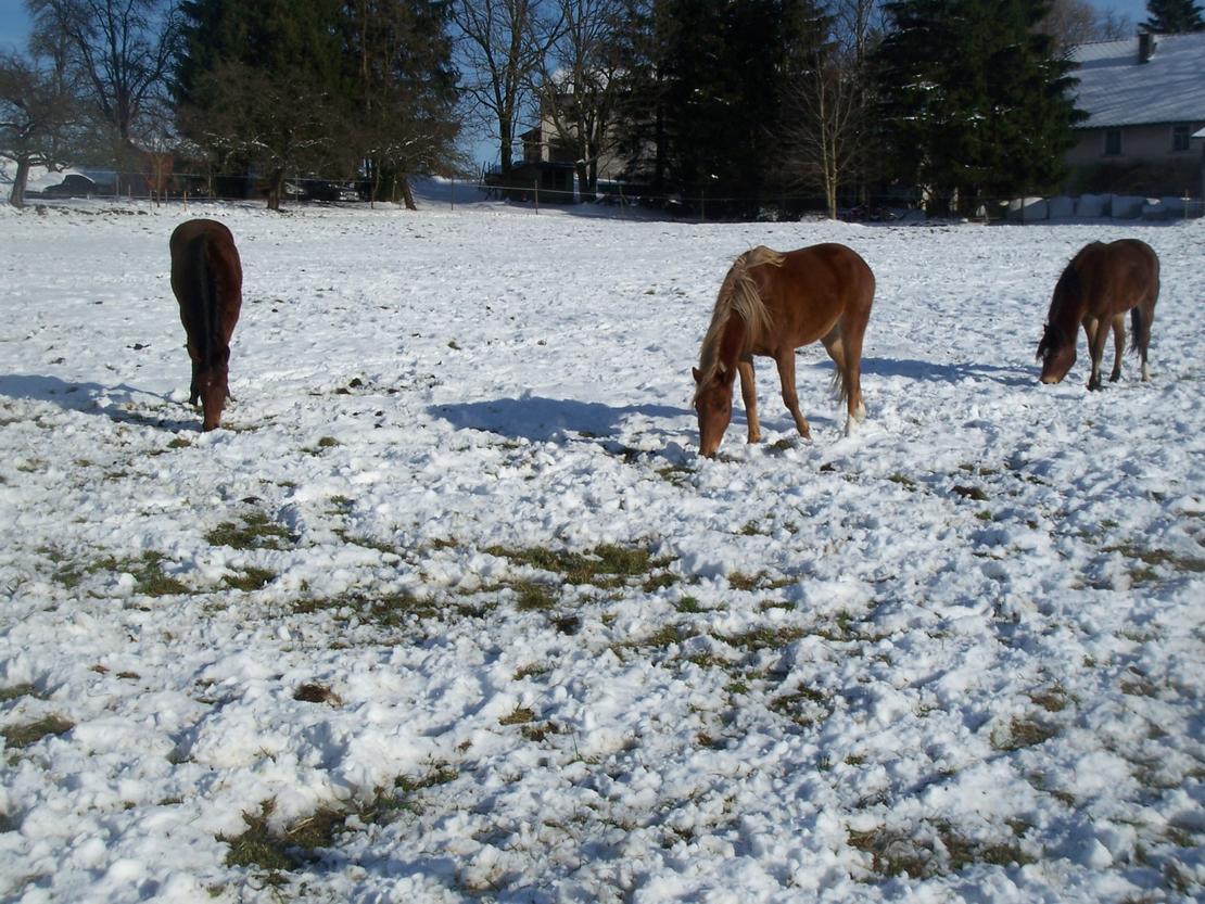 Auch im Winter gibt es Weidegang