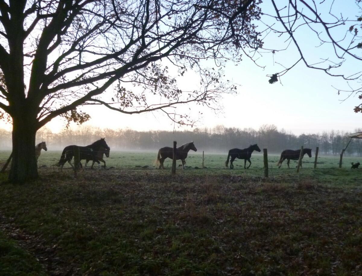 Pferde unterwegs auf dem Trail