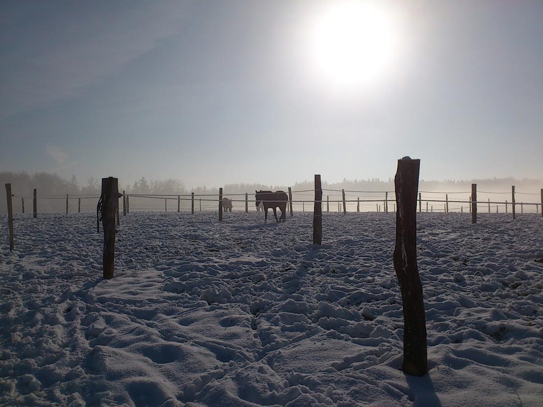 Koppeln im Winter