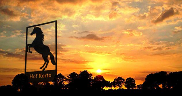 Einen schönen Lebensabend für ihr Pferd