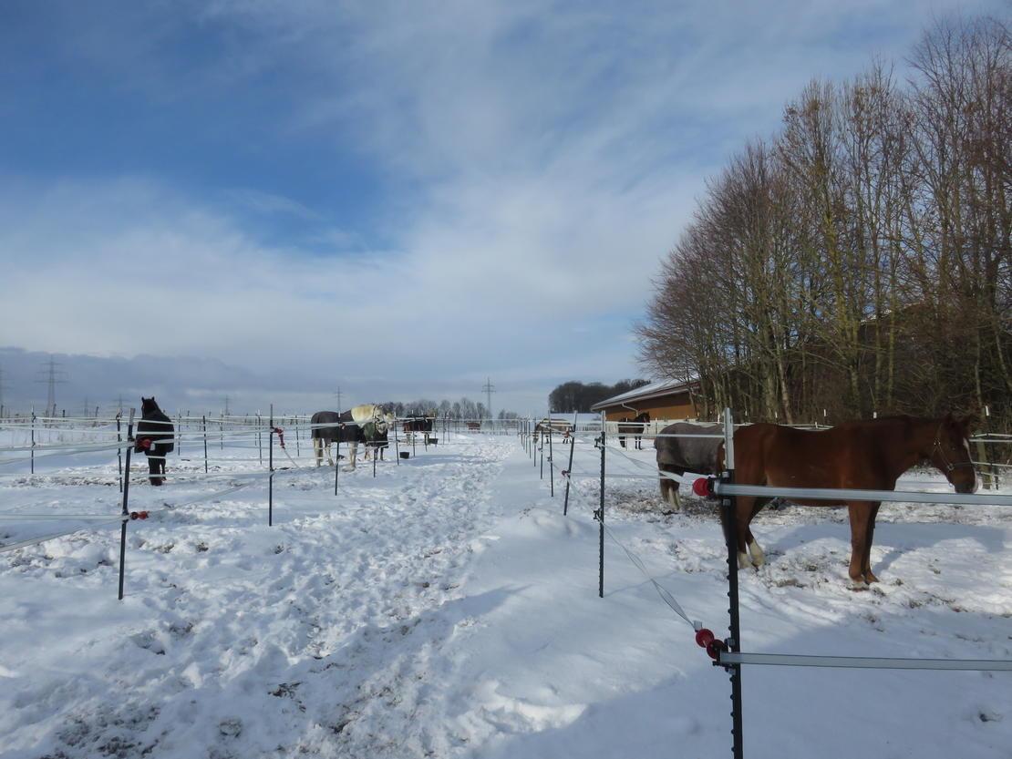 Winterpaddocks