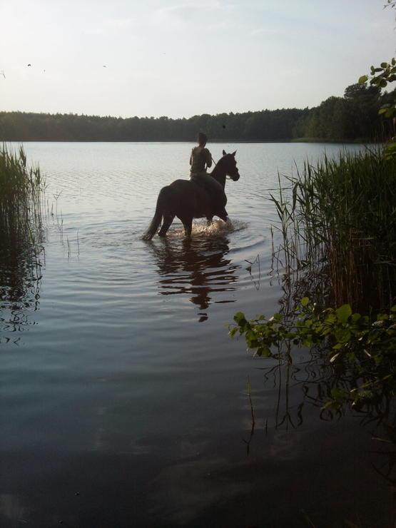 Wald- und Seenreiche Umgebung, endlose Reitwege