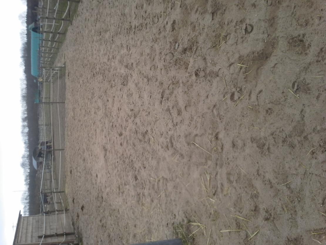 Sandkoppel