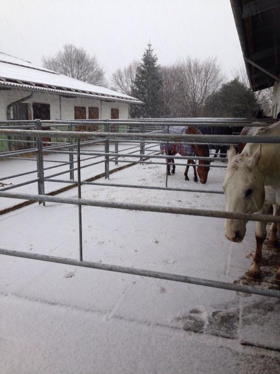Paddockboxen im Winter
