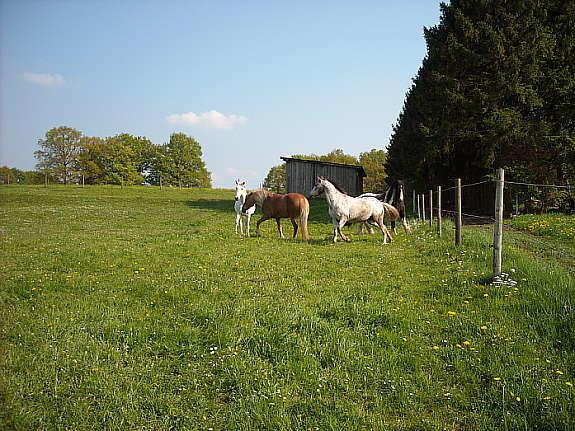 Pferdegruppe auf Weide (alle mit Schuppen)