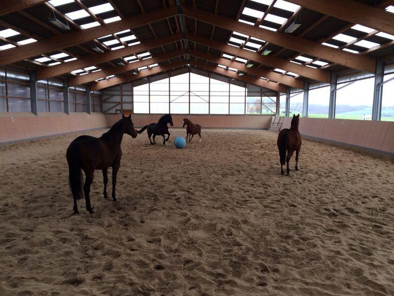 Pferde spielen Fußball