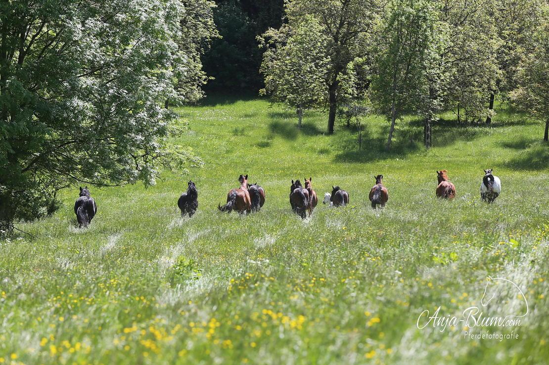 16 ha Weiden