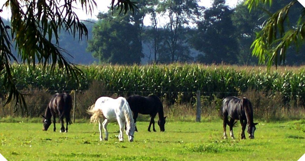 Unsere Sommerwiesen, direkt am Hof gelegen
