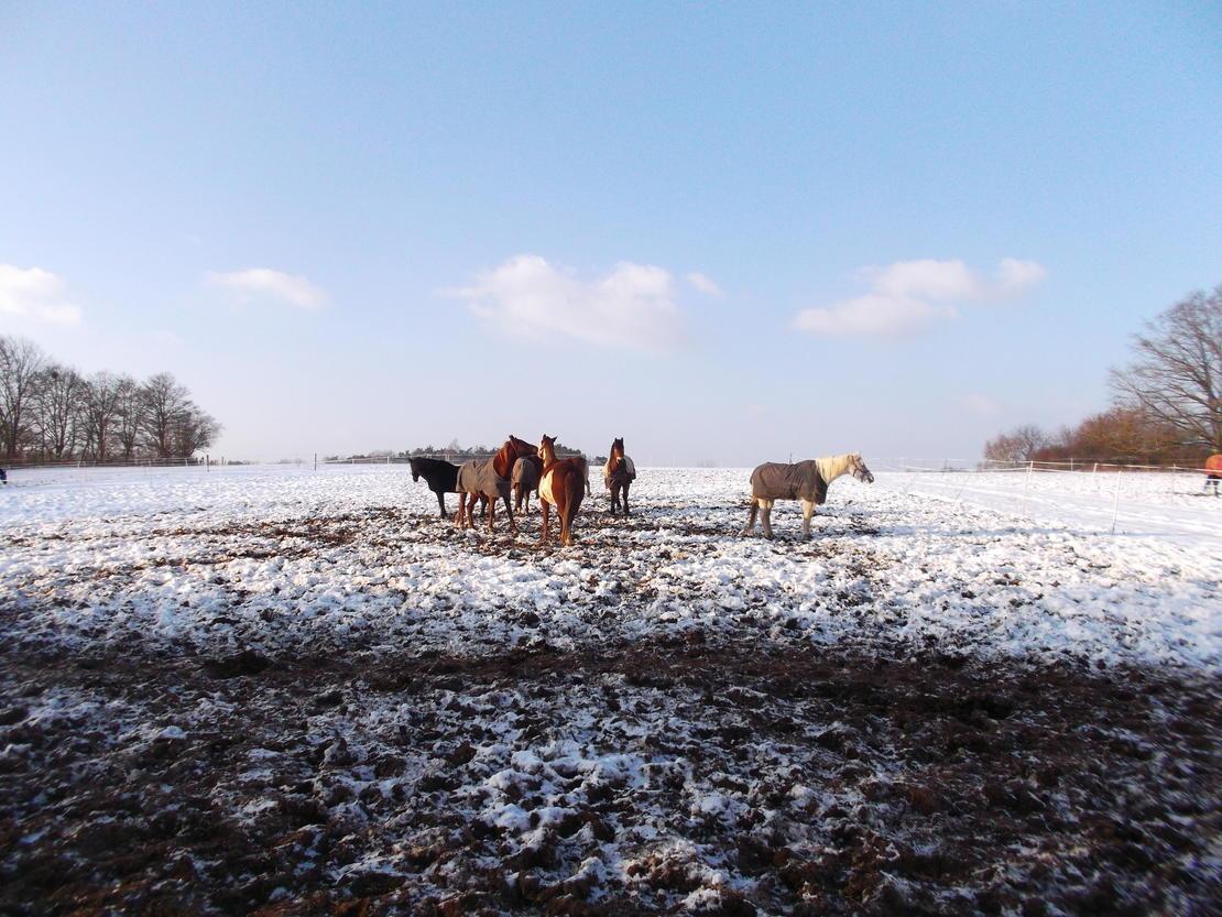 Winterauslauf
