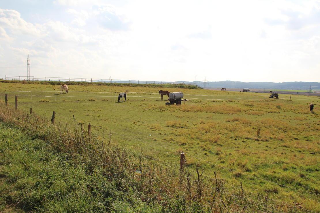 Blick auf Weide und Reitplatz