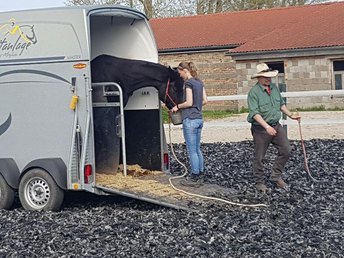 Horsemanship Verladetraining