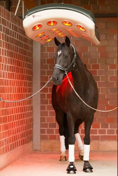 Für's Wohlbefinden unserer Pferde