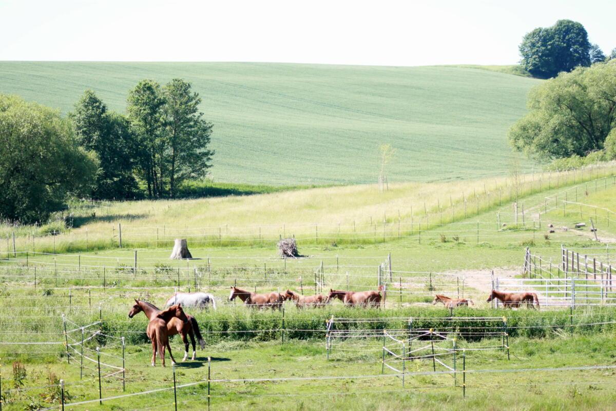 so weit das Auge reicht: Raum für Pferde