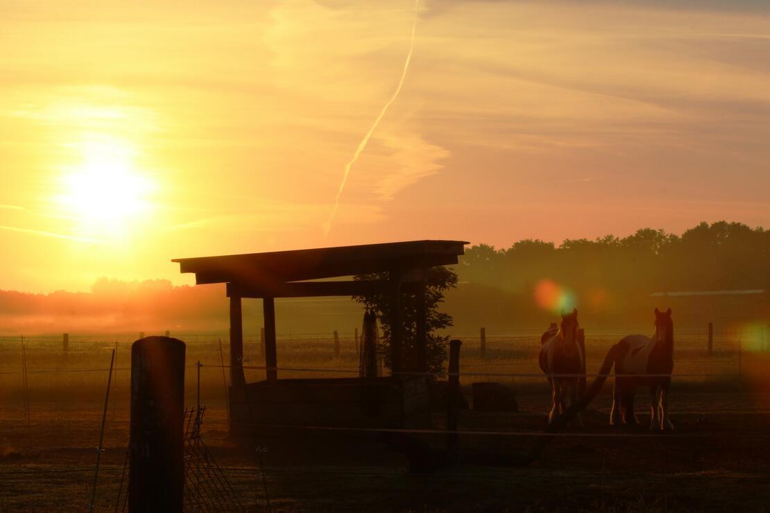 Morgens auf dem Soorbeckenhof