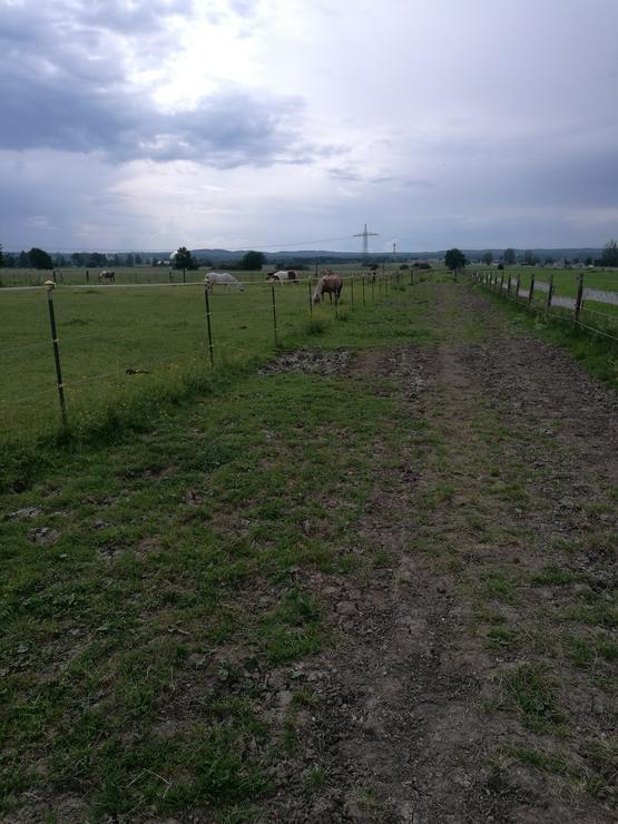 Tracks, je Pferdegruppe ca. 400m