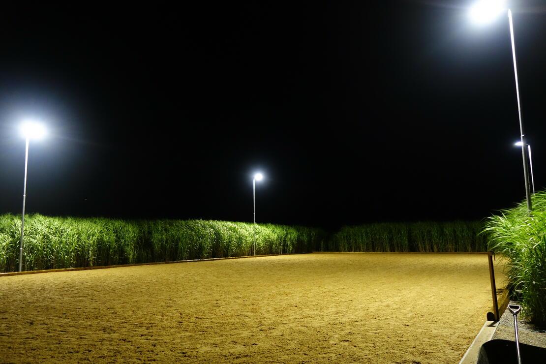 LED Flutlichtanlage Reitplatz
