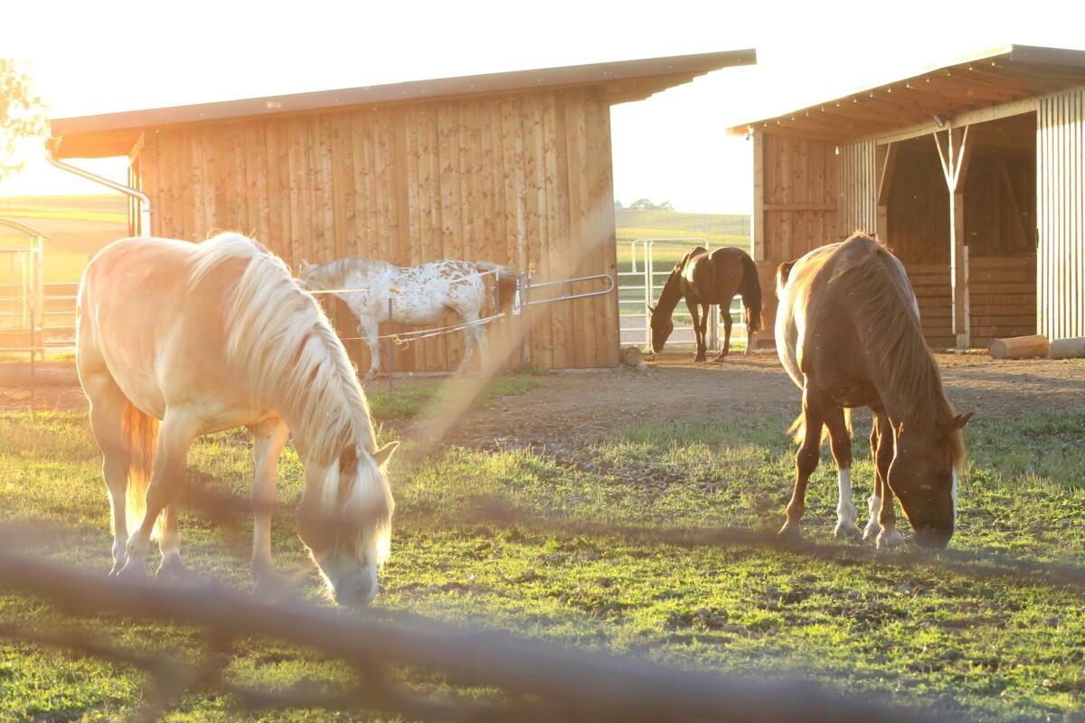 entspannte Pferde, ruhige Atmosphäre