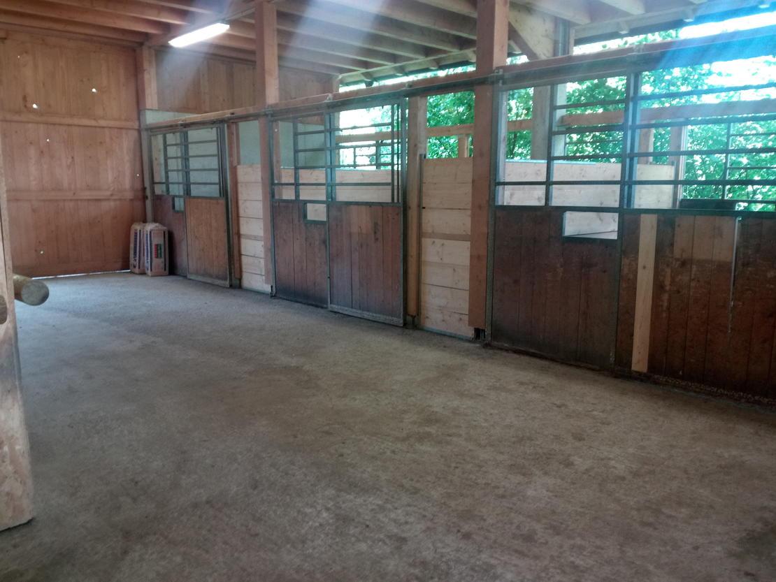4 x 4m Innenboxen mit geräumigem Putzplatz