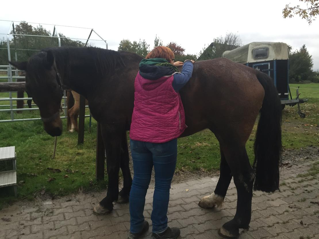 Osteopathie REHA-Pferd