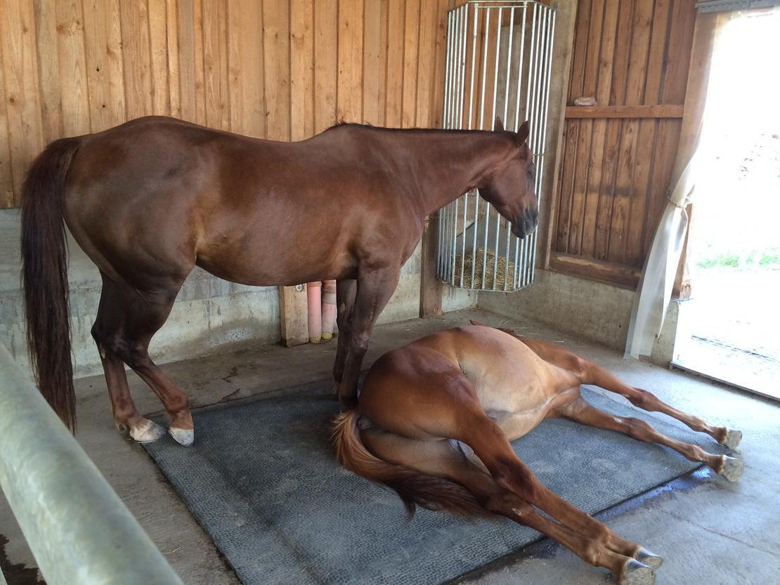 Chillen der Pferde im REHA-Zentrum Horses