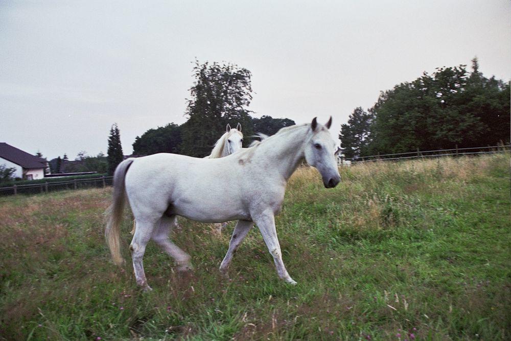 Tag- und Nacht Pferd sein im Sommer