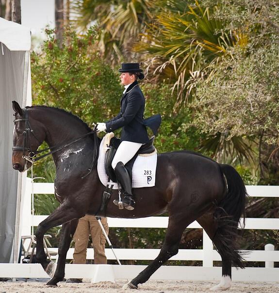 Ausbildung für Pferd & Reiter, Schwerpunkt Dressu