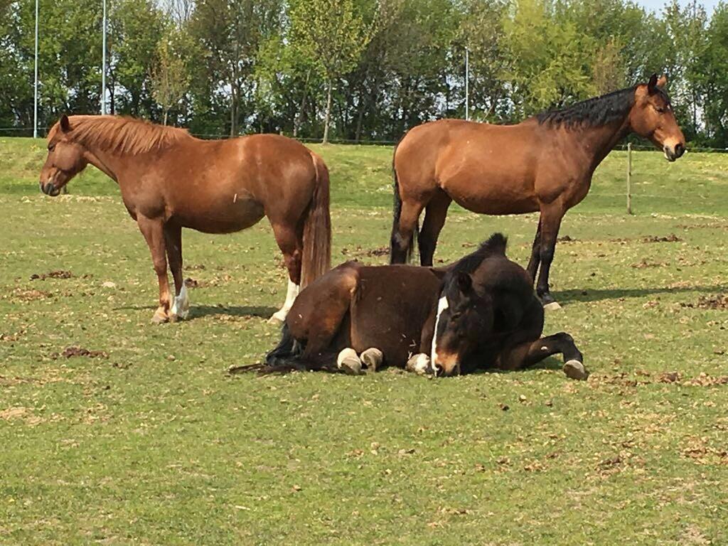 Pferdeidylle