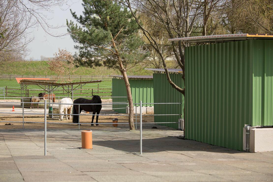 Kleingruppen-Ställe für je 4 Pferde