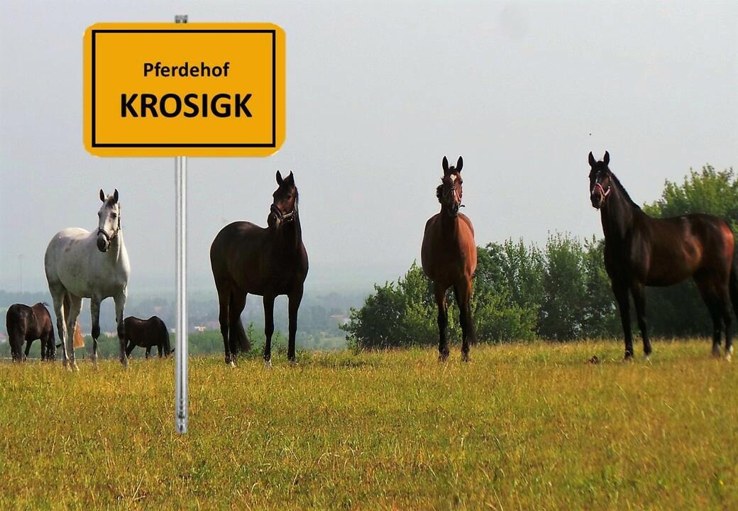 Pferdehof Krosigk - eine gute Adresse