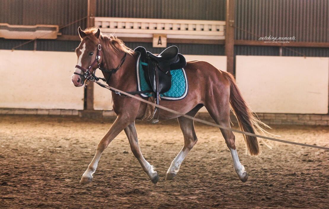 Pferdeausbildung schonend und nachhaltig!