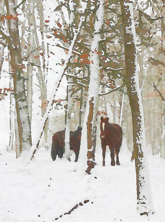 Wald ist großer Pferdespielplatz
