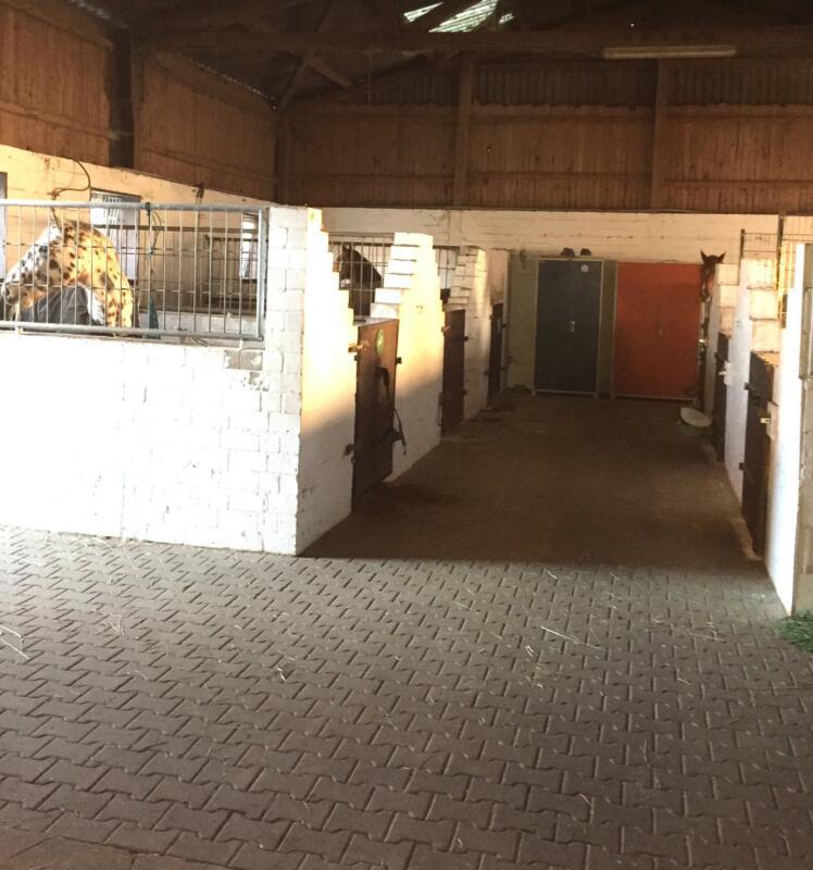Stallgasse Stall 2