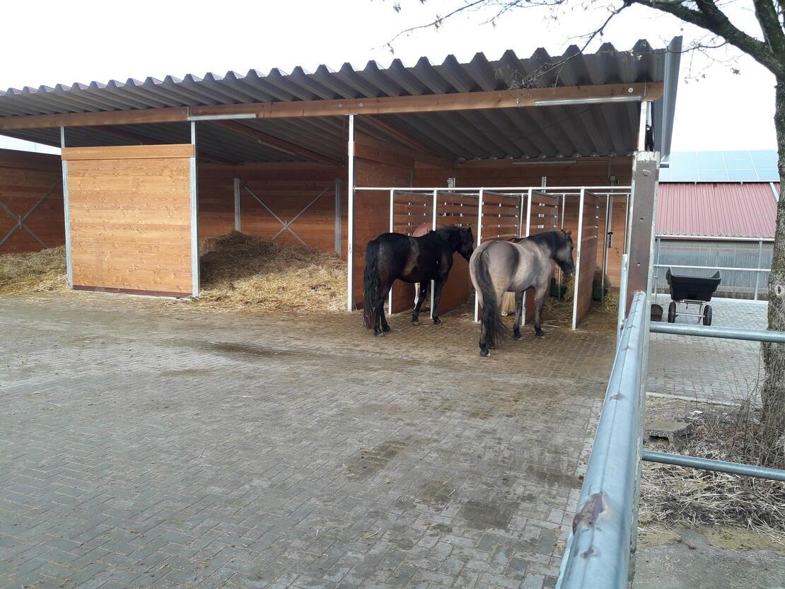Laufstall für 6 Pferde