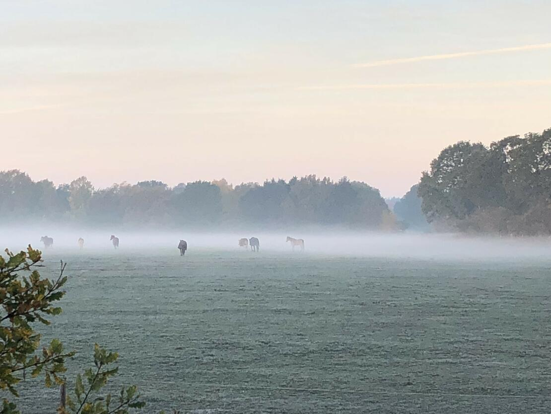 Herde im Nebel