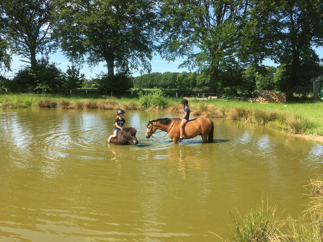 Sommerabkühlung im Teich