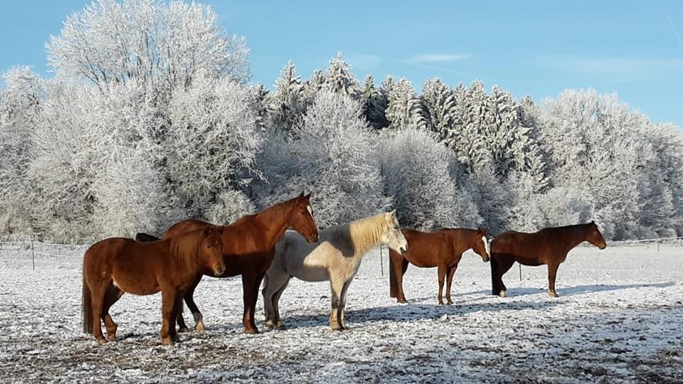 Sonnenanbeter/innen im Winter