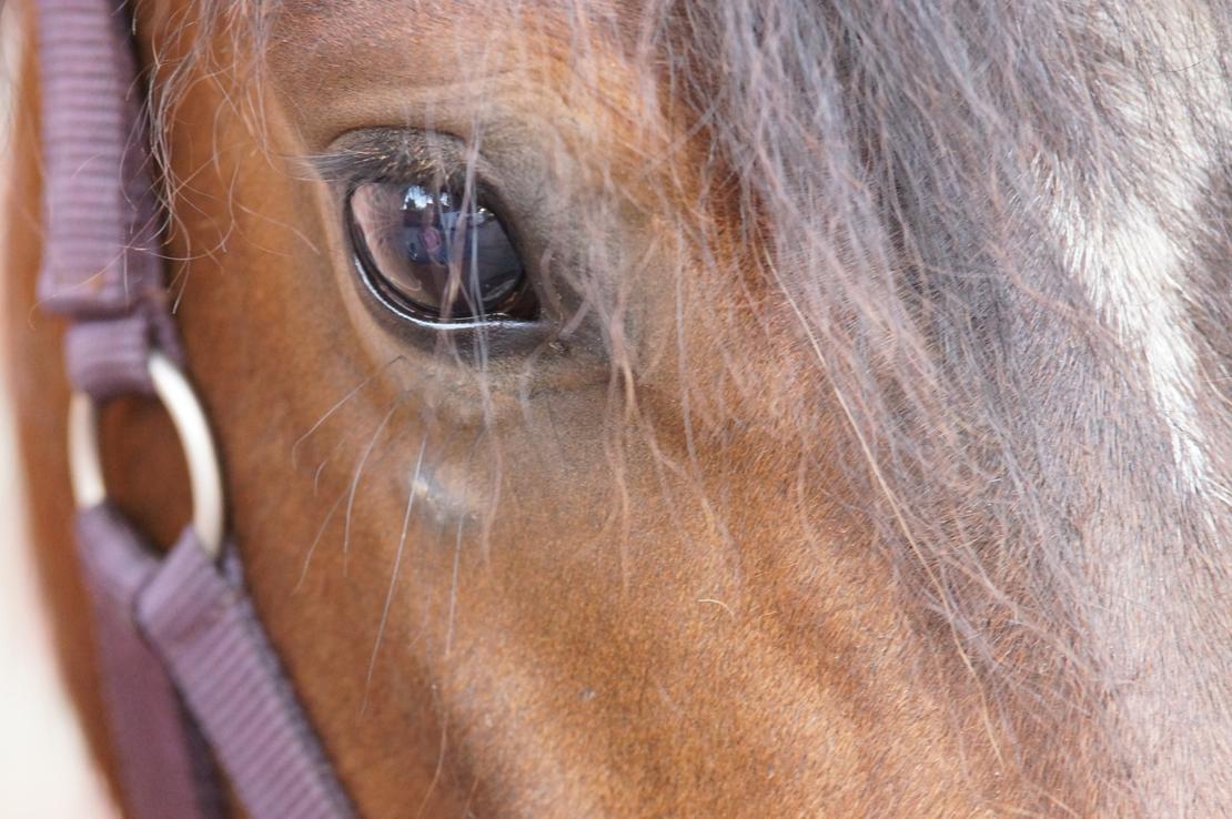 Dasselbe Pony während der Behandlung