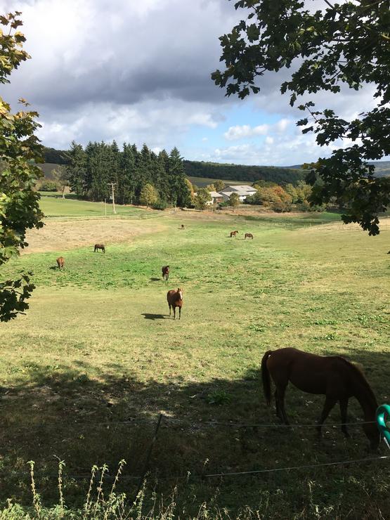 Große, sichere & gepflegte Weideflächen