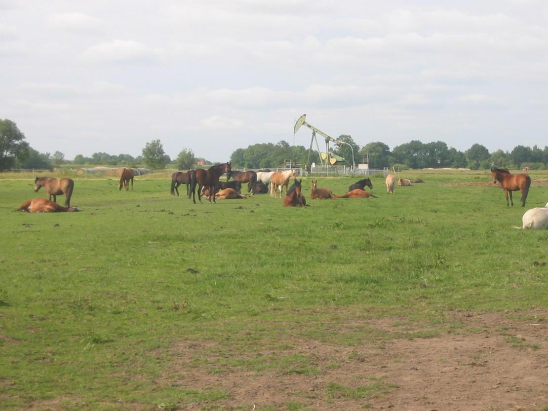 Ein Teil unsere Herde auf der Weide