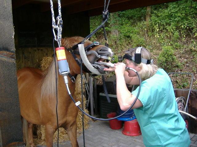geprüfte Pferdedentistin der BESW Equident