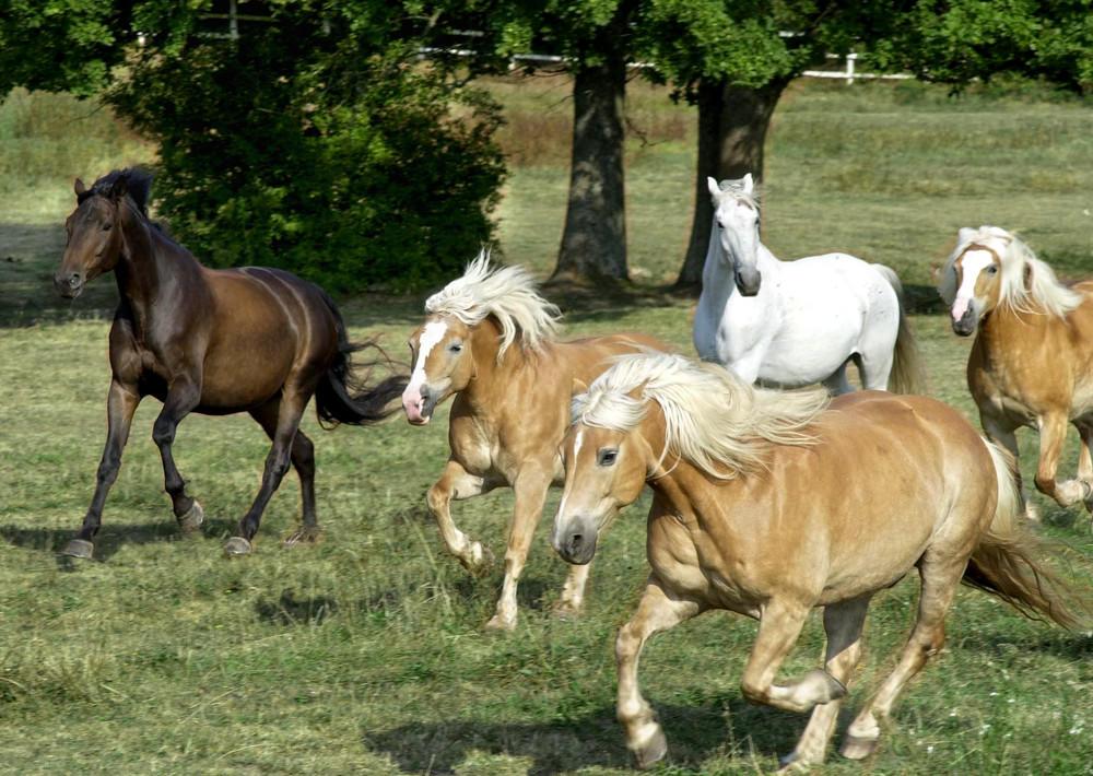 Pferde auf fest eingezäunter Koppel mit Baumbesta