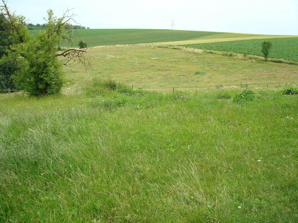 Große und saftige Weiden