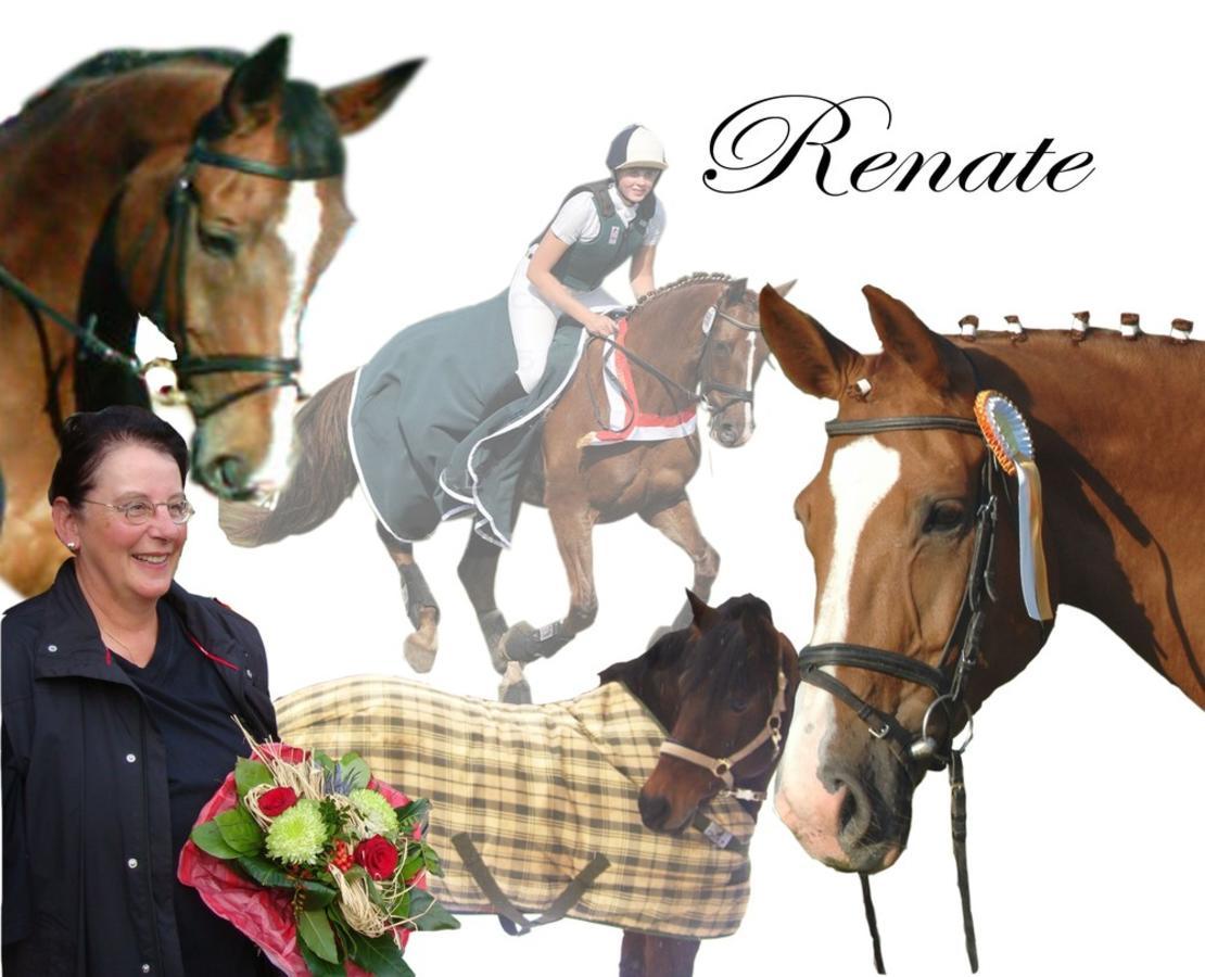 Erfolgreiche Ausbildung mit tollen Pferden + Ponys