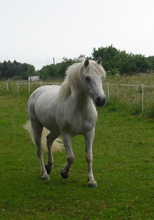 25jähriges Pony auf 100% gesunden Hufen