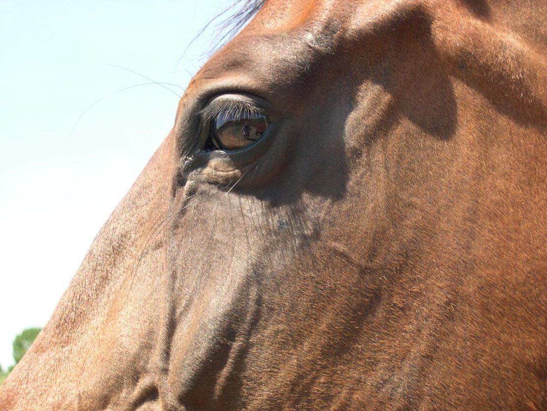 Pferde spiegeln uns