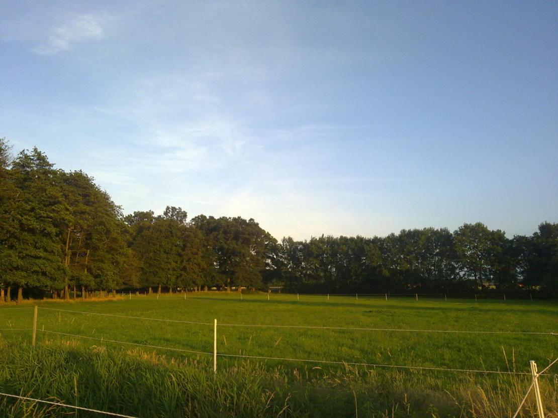 Weiden hinterm Wald